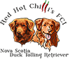 Red Hot Chilli's FCI - Nova Scotia Duck Tolling Retriever